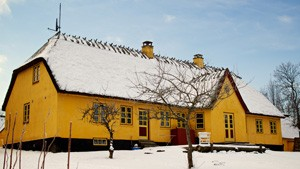 Fæld selv Juletræer på Bondegaarden ved Roskilde